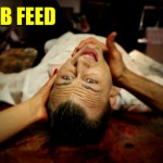 lamb-feed-3
